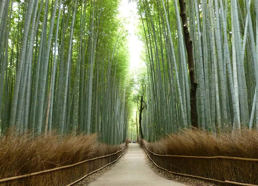 Foresta-di-Bambu
