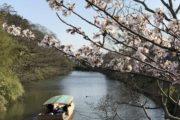 giappone-tour-hanami-fioritura