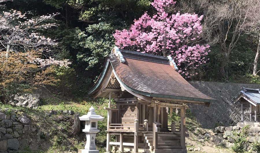 giappone-tour-hanami-fioritura-tempio