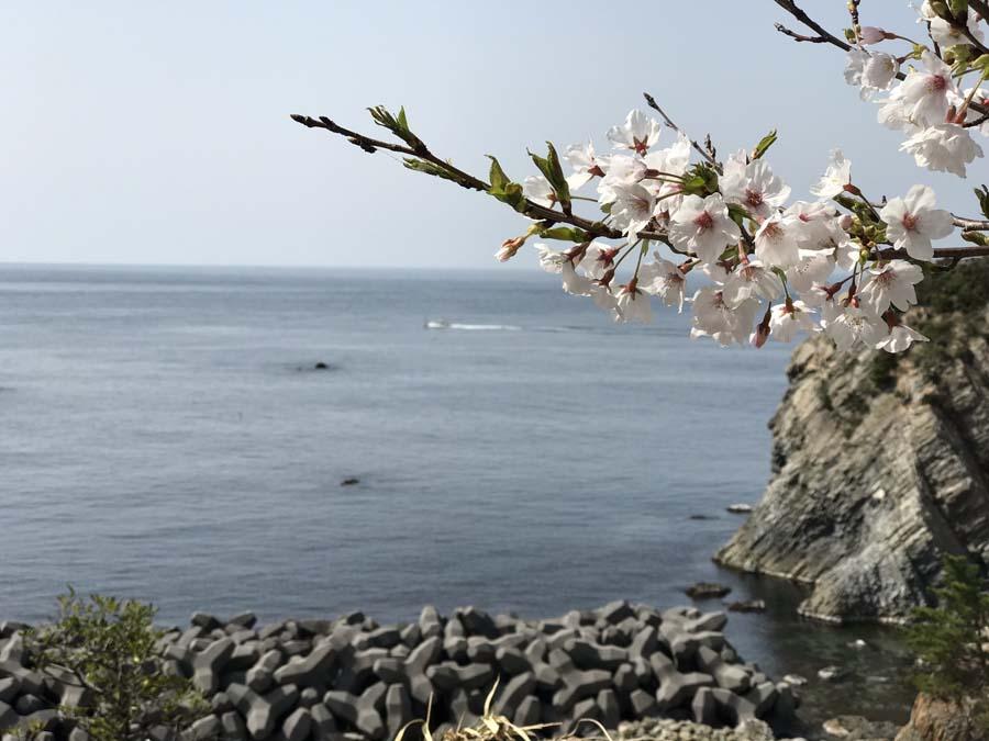 giappone-tour-hanami-fioritura-ciliegi
