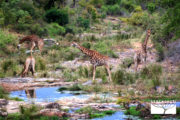 tour-sudafrica-kruger-national-park