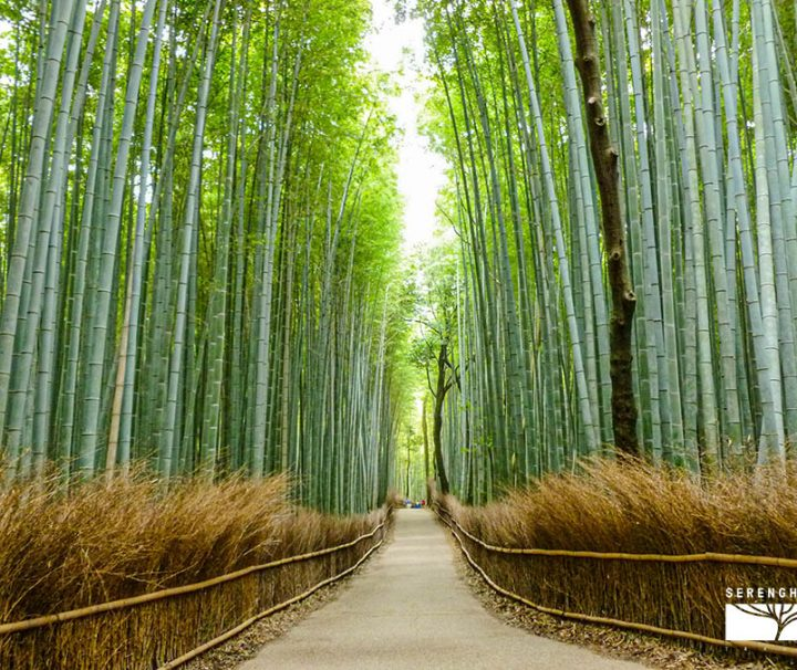 giappone-tour-harashiyama
