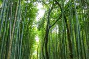 giappone-tour-arashiyama
