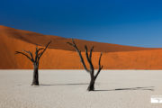 tour-safari-namibia
