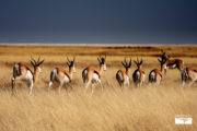 tour-safari-namibia-etosha