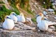 nuova-zelanda-fly&drive-birdwatching