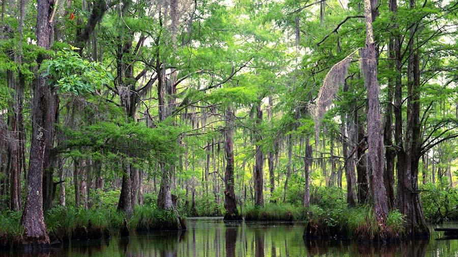 Escursione-Mississippi