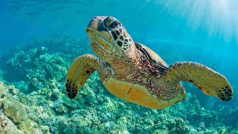 escursione-snorkeling-kauai
