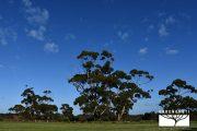 kangaroo-island-australia